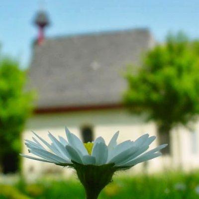 Blumen_Hl